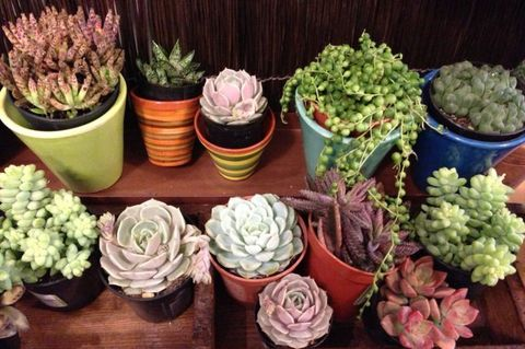 How to Not Suck at Succulents