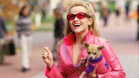 Dog, Canidae, Eyewear, Companion dog, Pink, Dog breed, Sunglasses, Street fashion, Blond, Carnivore,