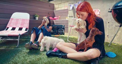 Human, Shoe, Dog, Carnivore, Mammal, Dog breed, Pink, Outdoor furniture, Bench, Toy dog,