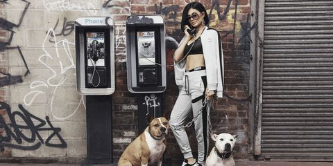 Dog breed, Dog, Carnivore, Telephone, Communication Device, Collar, Telephony, Payphone, Mobile phone, Snout,