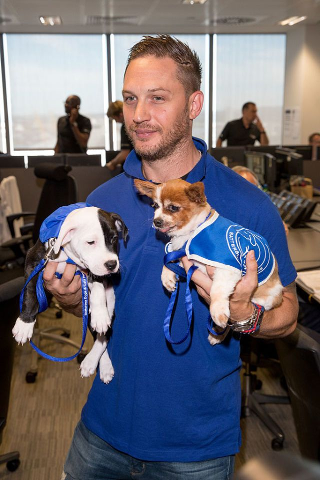 These Puppies Are Not Adequately Excited About Being Held by Tom Hardy