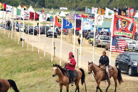 Halter, Shoe, Bridle, Horse supplies, Horse, Vertebrate, Horse tack, Rein, Animal sports, Equestrian sport,