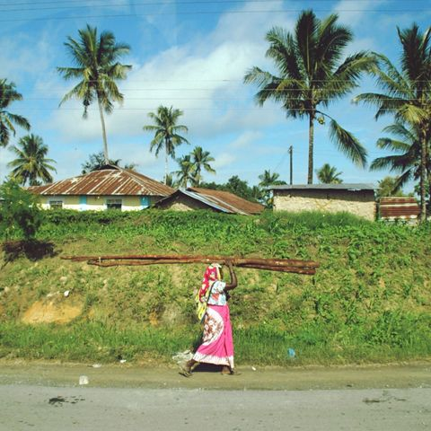 Tree, Arecales, Woody plant, Kimono, Tropics, Palm tree, Village, Plantation,