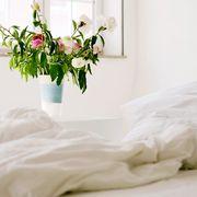 Bed sheet, White, Bed, Bedding, Room, Furniture, Bedroom, Flower, Textile, Plant,