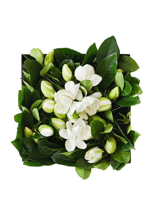"""<p>Fresh-cut flowers make any table more beautiful. Skip the pre-fab bouquet in favor of a delivery of loose gardenias perfect for arranging in your own glassware.</p><p><em data-redactor-tag=""""em"""" data-verified=""""redactor"""">High Camp Vine &amp; Bloom Box, $129; </em><a href=""""https://www.highcampsupply.com/shop/vine-bloom-box"""" target=""""_blank"""" data-tracking-id=""""recirc-text-link""""><em data-redactor-tag=""""em"""" data-verified=""""redactor"""">highcampsupply.com</em></a></p>"""