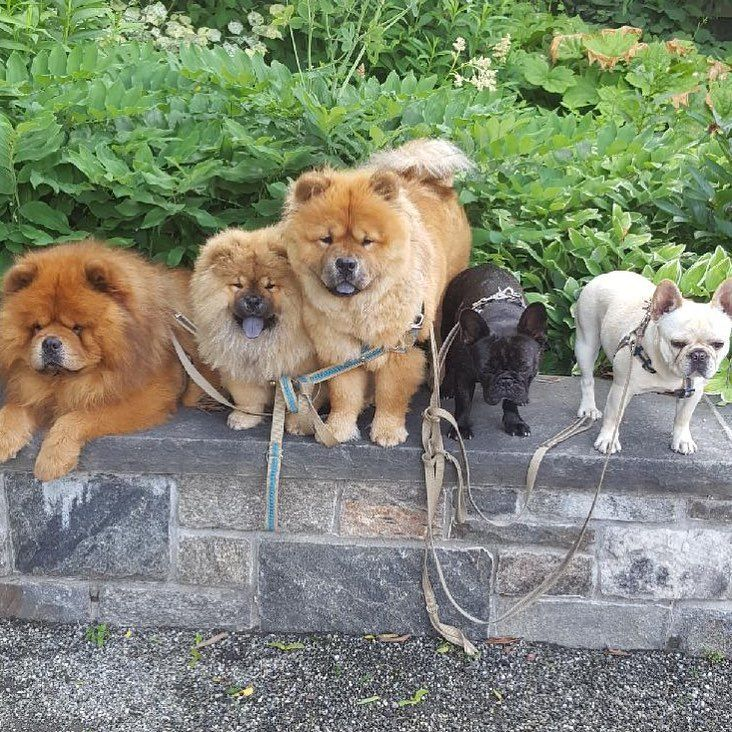 Martha Stewart's dogs