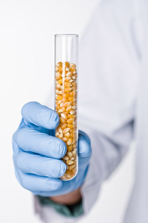 The Bad Seed: The Health Risks of Genetically Modified Corn