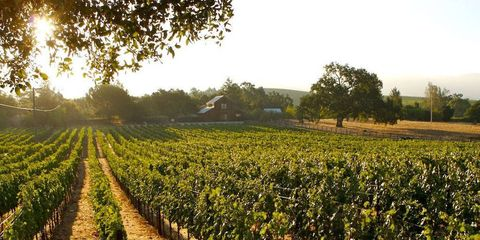 Travel: Eat. Drink. Repeat. Your Ultimate Wine Country Escape.