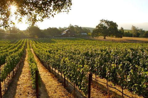 Agriculture, Farm, Field, Plantation, Plant community, Land lot, Rural area, Sunlight, Crop, Cash crop,