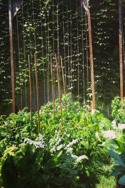 Vegetation, Natural environment, Leaf, Forest, Terrestrial plant, Botany, Nature reserve, Jungle, Vascular plant, Old-growth forest,