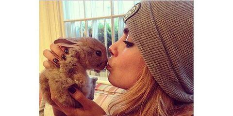 The Best Celebrity Pets on Instagram