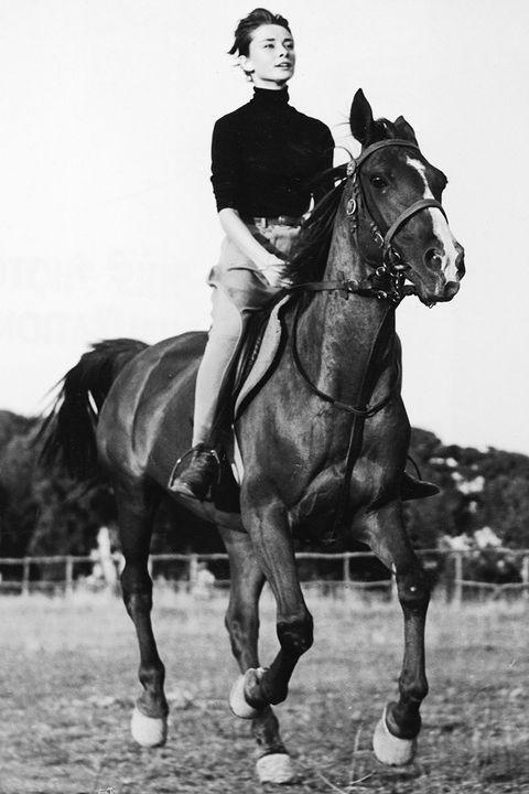 Human, Bridle, Halter, Horse, Horse supplies, Rein, Horse tack, Mammal, Saddle, Equestrianism,