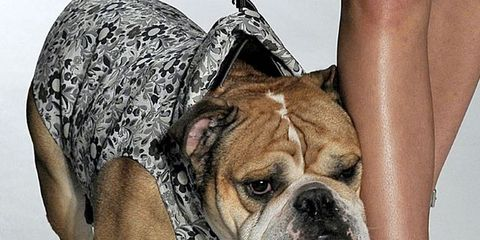 14 Ways to Fashionably Show Your Dog Some Love