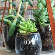 Flowerpot, Glass, Serveware, Terrestrial plant, Houseplant, Interior design, Plant stem, Ceramic, Succulent plant, Still life photography,
