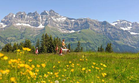 """<p> Martigny (<a href=""""http://www.myswitzerland.com"""" target=""""_blank"""">Suiza</a>).<br />Las montañas suizas son la patria de los San Bernardo, y en este escenario idílico te acordarás de Heidi y su inseparable perro. Desde el 2 de marzo hasta el 27 de abril, cada miércoles y sábado la Fundación Barry organiza itinerarios, perfectos para familias, en los que descubrirás campos y viñedos, acompañado siempre por estos magníficos canes. Una vez en Martigny se puede visitar el <a href=""""http://www.fondation-barry.ch"""" target=""""_blank"""">Musée et Chiens.</a>&nbsp;</p><p> <strong>2. Diamante negro del bosque</strong>&nbsp;<br /> <a href=""""http://www.hotelalfonsosoria.com"""" target=""""_blank"""">Hotel Alfonso VIII</a> (Soria).&nbsp;&nbsp; <br />Tu espíritu gourmet quedará más que satisfecho en las Jornadas gastronómicas de la trufa, que tienen lugar entre febrero y marzo.&nbsp;El trufiturismo hace que más de un millar de personas acudan a tierras sorianas para buscar entre sus encinares el preciado hongo, y luego degustarlo de mil maneras posibles.&nbsp;Apúntate a la jornada de caza, una actividad para descubrir su recolección con un perro trufero.</p>"""
