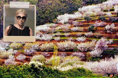 """<p> <strong>Así es:</strong> Lo llaman la Galicia de Extremadura por su microclima, suave y agradable, su paisaje, verde e inesperado, y su gastronomía, consistente y variadísima. <br /> <strong>Te encontrarás con:</strong> Pepe Barroso, Alejandro Sanz, Ana Rosa Quintana, Marta Sánchez o Eugenia Silva, algunas de las celebrities patrias que tienen sus casas en antiguos secaderos de tabaco. <br /> <strong>Alójate en:</strong> El Parador de Jarandilla, como hizo Carlos V mientras le construían el Monasterio de Yuste (<a href=""""http://www.parador.es/es/"""" target=""""_blank"""">www.parador.es</a>, desde 85 €). <br /> <strong>Come en:</strong> El hotel rural Ruta Imperial sirve Los huevos de Alejandro, en honor a Alejandro Sanz. Deliciosos (Machoteral, s/n, <a rel=""""nofollow"""" href=""""http://web.hotelruralrutaimperial.com/"""" target=""""_blank"""">www.hotelruralrutaimperial.com</a>, 13 €). <br /> <strong>De compras:</strong> Hazte con un buen botín gastronómico en El Vínculo: mermelada, miel, dulces, vinos y pimentón (Antonio Serrano, 2). <br /><strong>Una curiosidad:</strong> El agua del charco Trabuquete es de un color esmeralda que no podrás creer.</p>"""