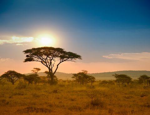 <p>Aprovecha octubre para ver animales en la temporada de 'lluvia corta' antes de que las carreteras se embarren tanto que no puedas recorrer el país. Sin calor y con la fauna a punto de caramelo, es un momento perfecto para recorrer el Serengeti (en la imagen), visitar las reservas del Rift y el lago Manyara, disfrutar de paisajes increíbles como el cráter de Norongoro, adentrarse en los secretos de los Masai y, cómo no, darse un buen baño en el Índico.</p>