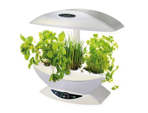 <p>Con este huerto eléctrico, en Naical, los podrás cultivar en tu cocina y los tendrás siempre a mano. </p>