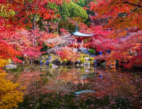 <p>La foto es de otoño, pero en cualquier época del año, la visita a este santuario es imprescindible. Se le denomina 'templo de las flores', es Patrimonio de la Humanidad por la UNESCO y es el edificio más antiguo de Kyoto (las partes más primitivas tienen un milenio de historia). Es famoso por ser el lugar donde se celebra el Manto-e o ceremonia de las diez mil luces, similar a Todos los Santos.</p>