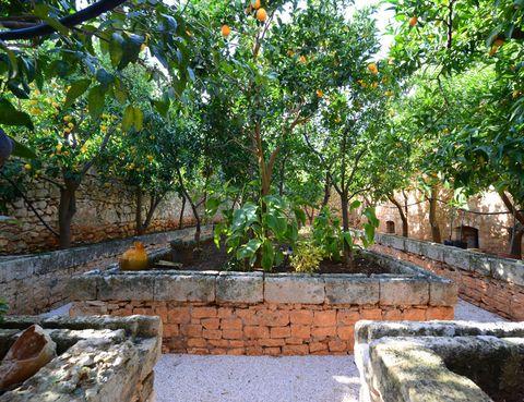 <p>En el jardín, naranjos y limoneros acompañan con su sombra.</p>