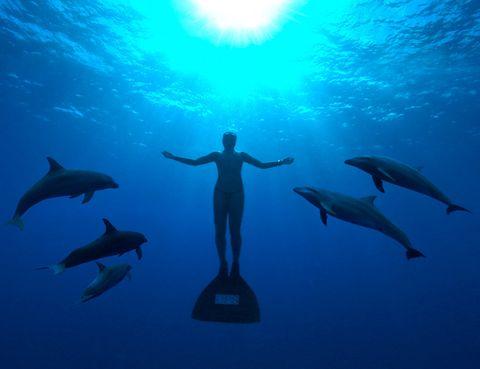 <p>Se trata de un impresionante alegato contra la matanza de delfines en Japón. Un documental que pone los pelos de punta a cualquiera que tenga cierto amor por la vida, y que debería hacer que nos replanteáramos temas como la cautividad de algunas especies en zoos, delfinarios y demás. Tras la cámara, Louie Psihoyos, fotógrafo de National Geographic, que tuvo que filmar parte de esta cinta de forma oculta. Ganó el Oscar en 2010. Imprescindible.</p>