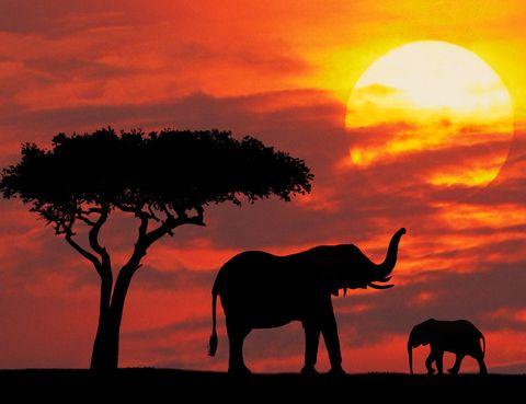 <p>Es pensar en un viaje por África y nos viene a la cabeza el atardecer perfecto. Para ver uno de los más impresionantes del continente africano, dirígete a la reserva natural de Masái Mara. La encontrarás en la región del Serengueti, al sudoeste de Kenia.</p>