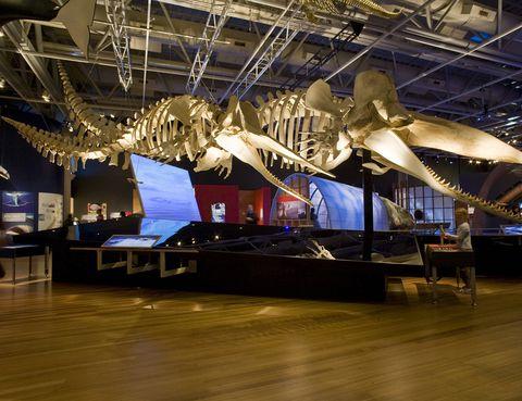 """<p>El museo de este país oceánico no tiene desperdicio: arte, geografía, historia, geología, flora, fauna, e incluso el archivo de correos. Un millón de personas visitan cada año este centro <a href=""""http://www.tepapa.govt.nz/pages/home.aspx"""" target=""""_blank"""">Te Papa Tongarewa,</a> situado en Wellington, que contiene además una importante colección cultural de los maoríes. </p>"""
