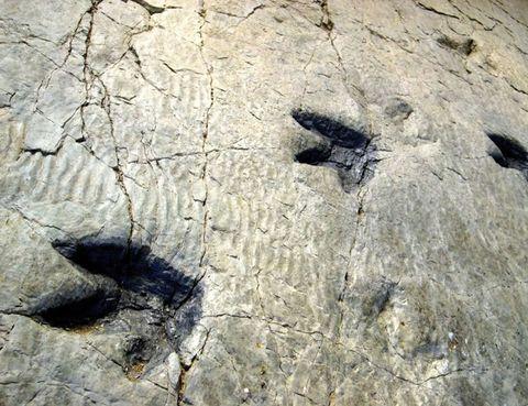 """<p>Aparte de mordeduras y madrigueras, las huellas son las icnitas –señales de actividad biológica– más útiles para estudiar el mundo animal. Si además pertenecen a un dinosaurio de 50 m, se convierten en una herramienta tan atractiva como valiosa. Para verlas, acércate a las Tierras Altas de Soria y recorre la <a href=""""http://www.rutadelasicnitas.com"""" target=""""_blank"""">Ruta de las Icnitas,</a> una experiencia que te hará viajar 150 millones de años. Hay varios senderos para ver los yacimientos, que finalizan en el Aula Paleontológica de Villar del Río.&nbsp&#x3B;</p>"""