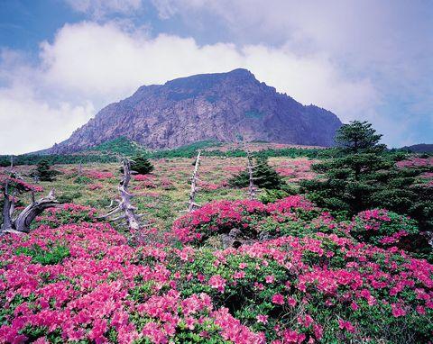 <p> Reserva de la Biosfera y Patrimonio de la Humanidad de la UNESCO, este parque nacional está localizado en la isla Jeju, en la provincia más al sur de Corea del Sur. <br />Su principal espectáculo son los accidentes geográficos, entre los que destacan la cueva de tubo de lava de Manjaggul (la más larga del mundo), El Pico del Amanecer y varias cuevas de dimensiones extraordinarias. Los viajeros que busquen aventuras pueden probar a escalar al punto más alto de Corea del Sur, el Monte Halla, para poder disfrutar del lago que hay en su cima.</p>