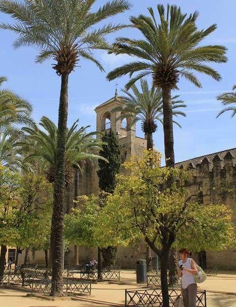 <p>Tapear en Córdoba es una liturgia que no se libra de tópicos: tabernas, terrazas, patios enjabelgados y repletos de macetas, puestos de caracoles, Mezquita-Catedral, Alcázar, murallas, sinagoga, turistas, rabo de toro y salmorejo. Resulta imposible escabullirse a la doble vida de una ciudad que espera, como agua de mayo, la avalancha de visitantes que llegan en autobús. Aunque, en buena medida, vive de espaldas a ellos. Si vienes por tu cuenta, el Ave continúa siendo la mejor manera de llegar desde Madrid y toda la red de alta velocidad. </p><p>En la Judería o el centro, repletos de tabernas para los turistas y bares para los cordobeses, se disfruta y mucho del espacio abierto, de la terracita y la conversación a la sombra, a mediodía o con la caída del sol. Cualquier recoveco o acera sirve para que la barra más minúscula se convierta en una animada terraza. Las encontrarás en la avenida del Gran Capitán, en las calles adyacentes a las Tendillas y San Miguel o a la vera del río. Con sus tapas y raciones. Pero, por encima de todo, en Córdoba reina la taberna, centenaria o moderna, con el pasado reflejado en sus paredes o relamidas como una chiquilla que va por vez primera a la feria.</p>