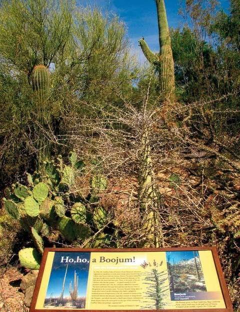 """<p>Este desierto, a caballo entre los estados norteamericanos de Arizona y California y el mexicano de Sonora –de donde toma el nombre–, es uno de los más grandes y calurosos del mundo. Pero esto no implica que aquí no haya vida, sino todo lo contrario: sus 311.000 km cuadrados acogen un ecosistema tan variado que ha dado lugar a un interesante museo. Mitad centro de interpretación y mitad zoológico, el <a href=""""http://www.desertmuseum.org"""" target=""""_blank"""">Museo del Desierto Arizona Sonora</a> muestra la vida de sus inquilinos a través de diferentes exhibiciones de marcado carácter didáctico. Aquí conocerás cómo viven los coatíes, verás el vuelo de la lechuza y las familias de correcaminos y te divertirás con los juegos de los perritos de la pradera. También cuenta con un aviario –intenta congelar el vuelo de un colibrí– y una completa muestra de cactus y suculentas, así como un recorrido por las más espectaculares gemas y minerales de la región. El museo está en Tucson (Arizona), abre todo el año y ofrece una completa zona de restaurantes para reponer fuerzas y ayudarte a soportar las altas temperaturas. Entrada adultos: 11 euros; niños: 3,4 euros.</p>"""
