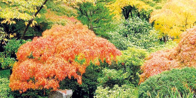 jardines arquitectura en verde - Jardines Bonitos