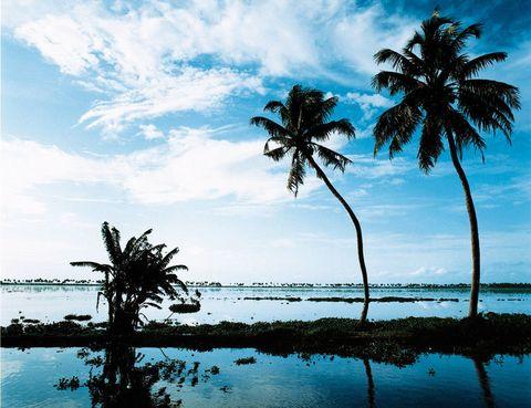 <p> «Aquí se pueden ver algunos de los atardeceres más románticos del mundo. Disfrútalos con un 'gin-tonic' en el jardín del hotel y luego cena un plato típico en un barco arrocero». Marta Michel, Subdirectora. <br /><strong>Coordenadas:</strong> Podrás contemplar estas palmeras en la región india de Kerala, en el hotel eco Kalari Kovilakom, al que sólo se llega en barco.</p>