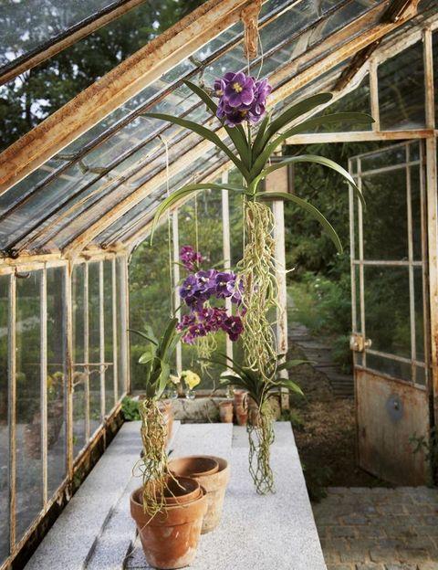 <p>Las plantas artificiales dan mucho juego: al no necesitar mantenimiento, pueden colgarse del techo directamente con un cordel. Éstas, de Sia, son unas orquídeas con raíces a la vista que dan una imagen muy salvaje.</p>