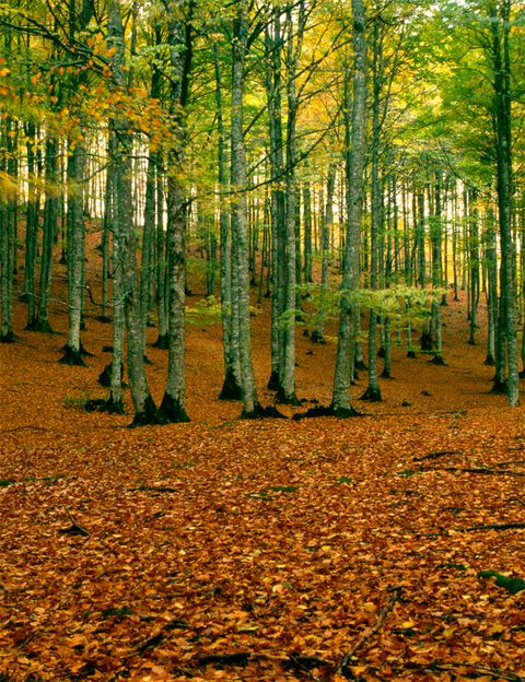 <p>Ha costado un poco pero el otoño ha llegado al fin y con él la magia de la naturaleza. Los colores cambian y la vista se nos llena de intensos ocres, rojos y amarillos, los senderos cubiertos de hojarasca estremecen nuestros oídos y los sabrosos frutos nos endulzan el paladar. ¿Y donde encontrar todo esto? En Irati, el segundo hayedo-abetal más extenso y mejor conservado de Europa. Un rincón de los pirineos donde disfrutar de la naturaleza en estado puro. Este fin de semana desconecta y vive lo natural.&nbsp&#x3B;</p>