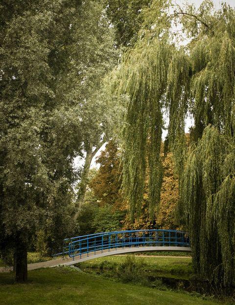<p>Este parque es el más grande de Ámsterdam y el lugar perfecto para montar en bici, patinar, comer rodeado por la naturaleza, etc. Si lo visitas en las noches de verano es muy fácil que te encuentres con un concierto o una obra de teatro al aire libre.</p>