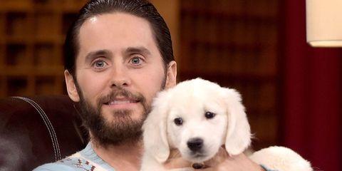 Human, Dog, Carnivore, Vertebrate, Dog breed, Mammal, Beard, Collar, Companion dog, Comfort,