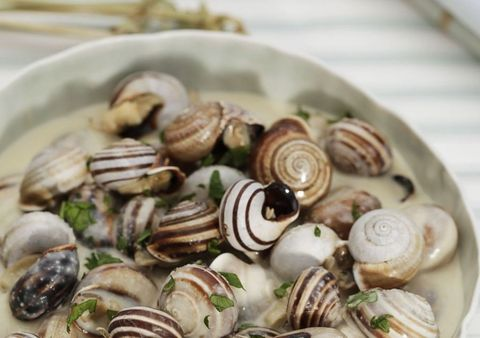 Shell, Natural material, Molluscs, Fawn, Snails and slugs, Recipe, Spiral, Bivalve, Seafood, Side dish,