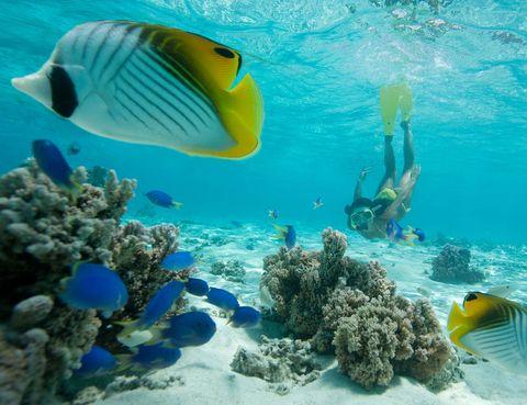 Underwater, Organism, Fluid, Natural environment, Vertebrate, Fish, Water, Aqua, Fin, Coral,