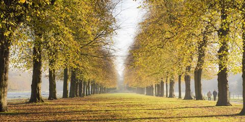 Tree, People in nature, Natural landscape, Nature, Woody plant, Autumn, Leaf, Deciduous, Atmospheric phenomenon, Yellow,