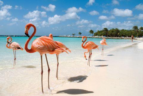 Flamingo, Greater flamingo, Bird, Water bird, Vacation, Sky, Summer, Wildlife, Beak, Landscape,