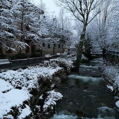 Snow, Winter, Tree, Water, Freezing, Frost, Branch, Waterway, Watercourse, Ice,