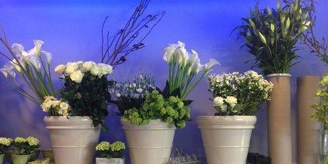 Blue, Flowerpot, Plant, Flower, Purple, Majorelle blue, Interior design, Lavender, Artifact, Vase,