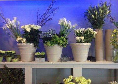 Blue, Flowerpot, Plant, Flower, Majorelle blue, Purple, Interior design, Lavender, Artifact, Vase,