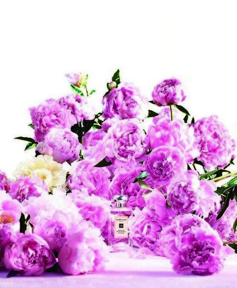 Purple, Petal, Flower, Violet, Lavender, Botany, Flowering plant, Colorfulness, Magenta, Lilac,