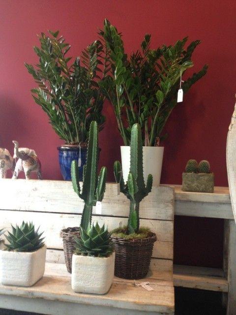 Plant, Flowerpot, Interior design, Botany, Terrestrial plant, Houseplant, Vase, Flowering plant, Artifact, Cactus,