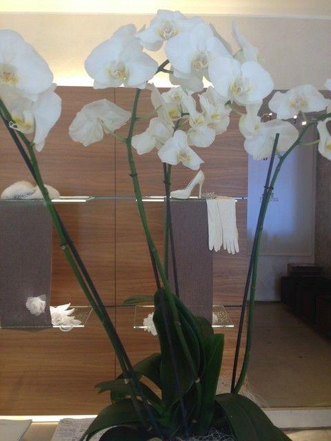 Petal, Flower, Flowerpot, Flowering plant, Floristry, Botany, Flower Arranging, Terrestrial plant, Plant stem, Houseplant,