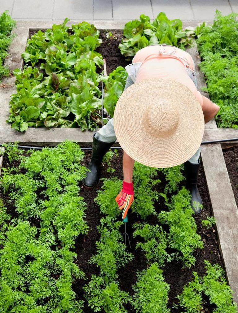 Orto sul balcone: 5 consigli per coltivare gli ortaggi
