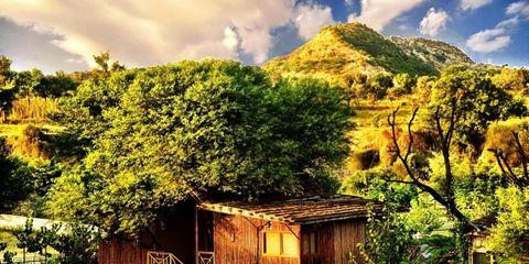 Wood, Vegetation, Landscape, House, Rural area, Log cabin, Roof, Hut, Shack, Home,