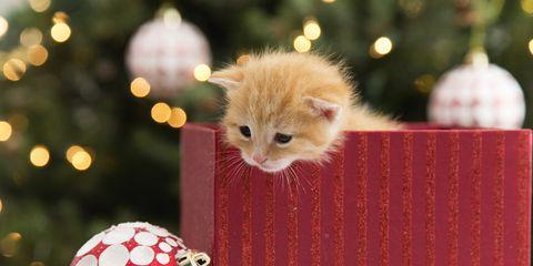 Guarda I Cani E Gatti Più Teneri Di Natale